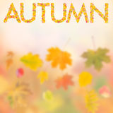 Autumn background for design IV. Autumn background with bright leaves for design, school season; selective focus Royalty Free Stock Photography