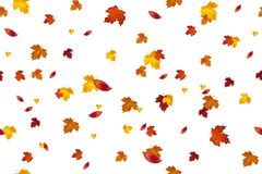 Autumn background design. Seamless pattern. Autumn falling red, yellow, orange and brown leaves isolated on white background. Vect. Or autumnal foliage fall of Royalty Free Stock Photo