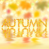Autumn background for design VI. Autumn background with bright leaves for design, school season; selective focus Royalty Free Stock Photo