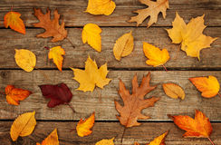 Autumn background - different shaped leaves on wood Royalty Free Stock Image