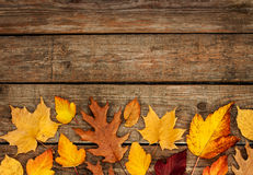 Autumn background - different shaped leaves on wood Stock Images
