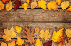 Autumn background - different shaped leaves on wood Royalty Free Stock Images