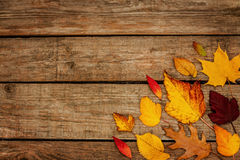 Autumn background - different shaped leaves on wood Stock Photos