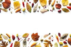 Autumn Background With Colorful Leaves, Chili Peppers And Red Be. Autumn background with dry seeds, red berries, chili peppers and colorful leaves stock images