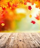 Autumn background with empty wooden planks Stock Images