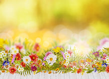 Autumn background with fall flowers bed and wooden terrace Stock Image
