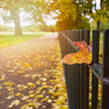 Autumn background with fall leaf on fence in park Royalty Free Stock Image