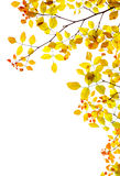 Autumn Background, Fall Leaves Natural Border Stock Images