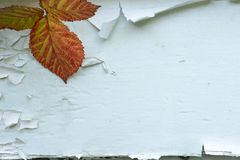 Autumn Background. Fall leaves on a peeling paint background Royalty Free Stock Image