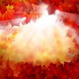 Autumn Background with Fall Leaves and Sun Glow Royalty Free Stock Photo