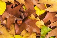 Autumn background Stock Images