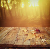 Autumn background of fallen leaves over wooden table and forest backgrond with lens flare and sunset Stock Photos