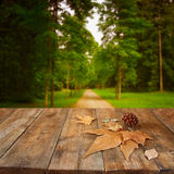 Autumn background of fallen leaves over wooden table and forest backgrond with lens flare and sunset Royalty Free Stock Images