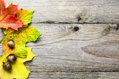 Autumn background with fallen maple leaves and acorns Royalty Free Stock Photo