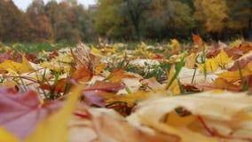 Autumn background stock video footage