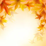Autumn background. With falling maple leaves stock illustration