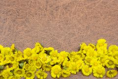 Autumn background. Flowers on a brown wood background. Place for inscription. Background for autumn holidays and thanksgiving day royalty free stock photo