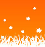 Autumn background with flying maples and grass Stock Photo