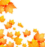 Autumn background with flying maples Stock Images