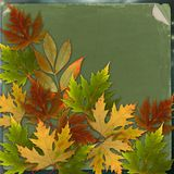 Autumn background with foliage and grunge paper Stock Image