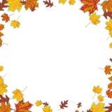 Autumn Background Foliage White Centre Immagine Stock