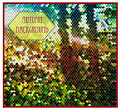Autumn background with forest of cubes. Autumn forest illuminated of the sun Royalty Free Stock Images