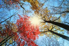 Autumn background, forest landscape. Autumn forest, trees on blue sky background stock images