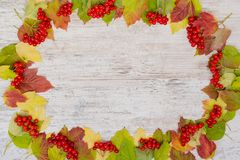 Autumn background. Frame of berries and colored leaves of viburnum. Copy space, flatly royalty free stock image