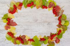 Autumn background. Frame of berries and colored leaves of viburnum. Copy space, flatly stock image