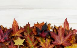AUTUMN BACKGROUND. FRAME OF COLORFUL FALL LEAVES ON WHITE WOODEN DESK.  stock photography