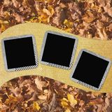 Autumn background with frames Stock Photos