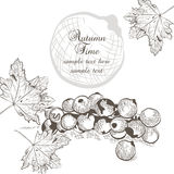Autumn background with fruits and leaves Stock Photos
