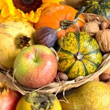 Autumn abundance Stock Images