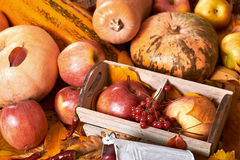 Autumn background, fruits and vegetables on yellow fallen leaves, apples and pumpkin, decoration in country style, dark brown tone Royalty Free Stock Images