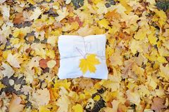 Autumn background with gift box and with maple leaf over the autumn leaves. royalty free stock photography
