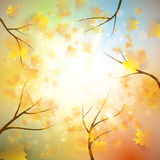 Autumn background with gold maple leaves. And bokeh lights with sunny sky, fall vector illustration Stock Photo