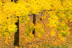 Autumn background. Golden colorful autumn leaves background stock photos