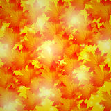 Autumn background.golden maple leaves Royalty Free Stock Photography