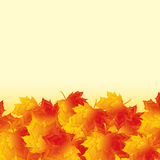 Autumn background with golden maple leaves Royalty Free Stock Photos