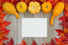 Autumn background with gourds and fall leaves with a greeting ca royalty free stock image