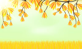 Autumn background. Grass and leaves Royalty Free Stock Image