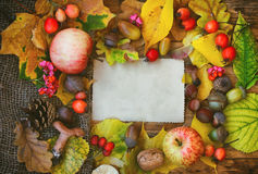 Autumn background, greetings card Royalty Free Stock Photo