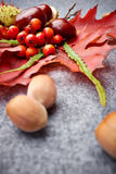 Autumn background Stock Photos