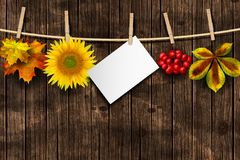Autumn background with hanging elements. Vector. Old wooden background with hanging autumn elements. Sunflower, autumn leaves, red berries, and empty paper royalty free stock photos