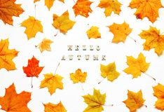 Autumn background with Hello Autumn letters and autumn maple leaves on the white background stock photos