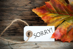 Autumn Background With Label Sorry. On Wooden Background Stock Images