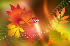 Autumn background with ladybug. Stock Photos