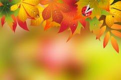 Autumn background with ladybug. Autumn background with ladybug and drops Royalty Free Stock Images