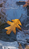 Autumn background, leaf and frozen water Royalty Free Stock Photos