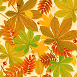 Autumn background. With leaf.  Happy thanksgiving day. eps 10 Stock Photo